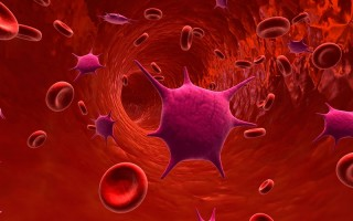 Повышенные тромбоциты. Как лечить и что делать с этим?