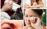 Аллергия на кошек симптомы и признаки