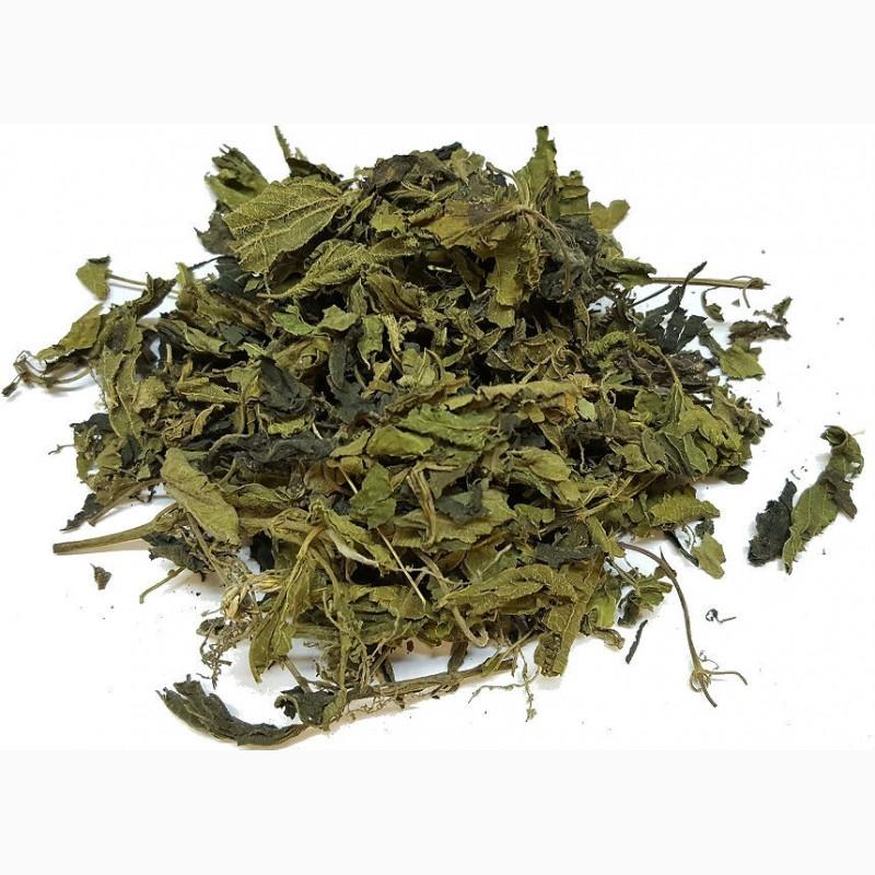 Листья иван-чая и двудомной крапивы с цветущей верхушкой гречихи