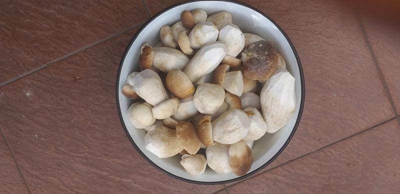 Настойка на основе белых грибов